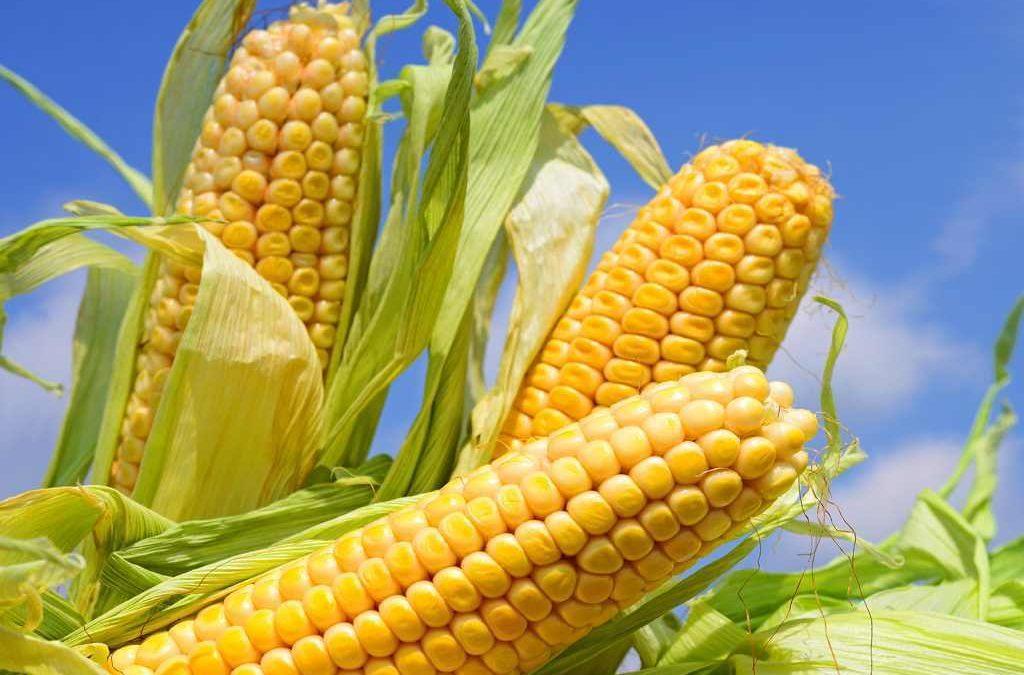 resep perkedel jagung biasa